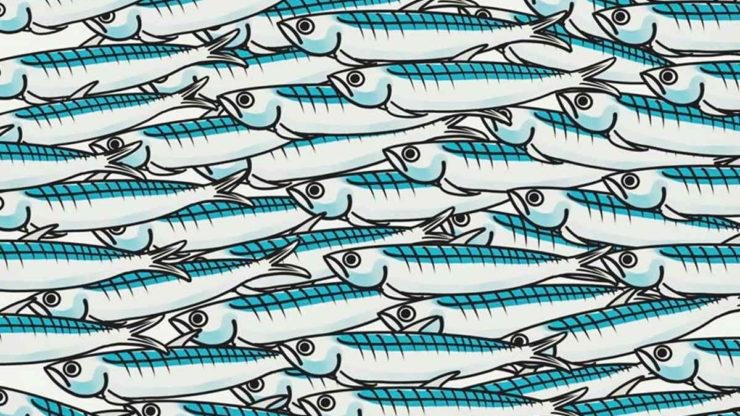 Pesce grande mangia pesce piccolo, ma pesci piccoli contestano pesce grande !